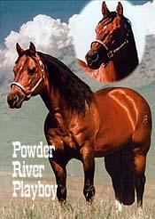 Resultado de imagem para POWDER RIVER PLAYBOY
